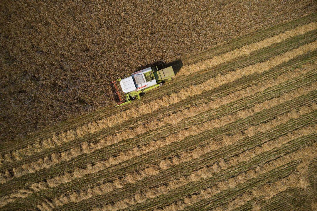 Der Mähdrescher fährt während der Ernte durch das Getreide-Feld