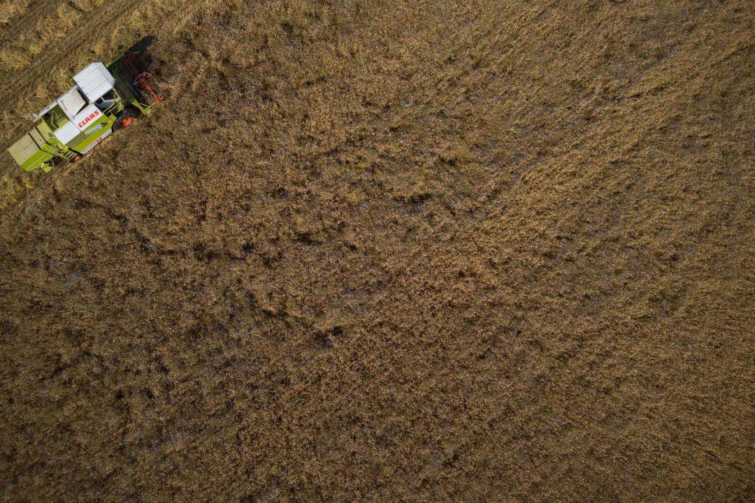 Der Mähdrescher fährt durch das Getreide-Feld