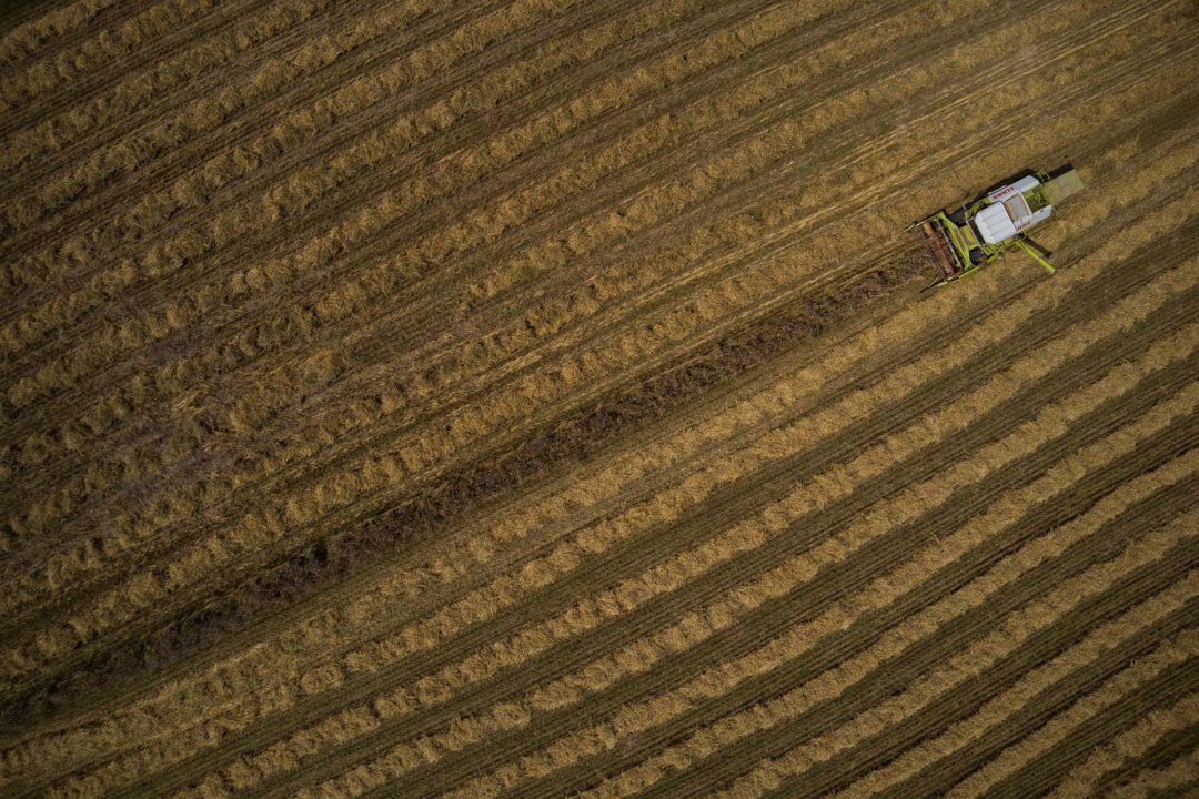 Der Mähdrescher fährt während der Ernte über das Getreide-Feld