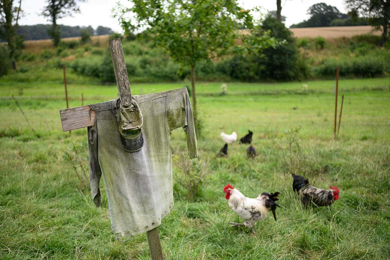 Freilaufende Hühner auf der Wiese