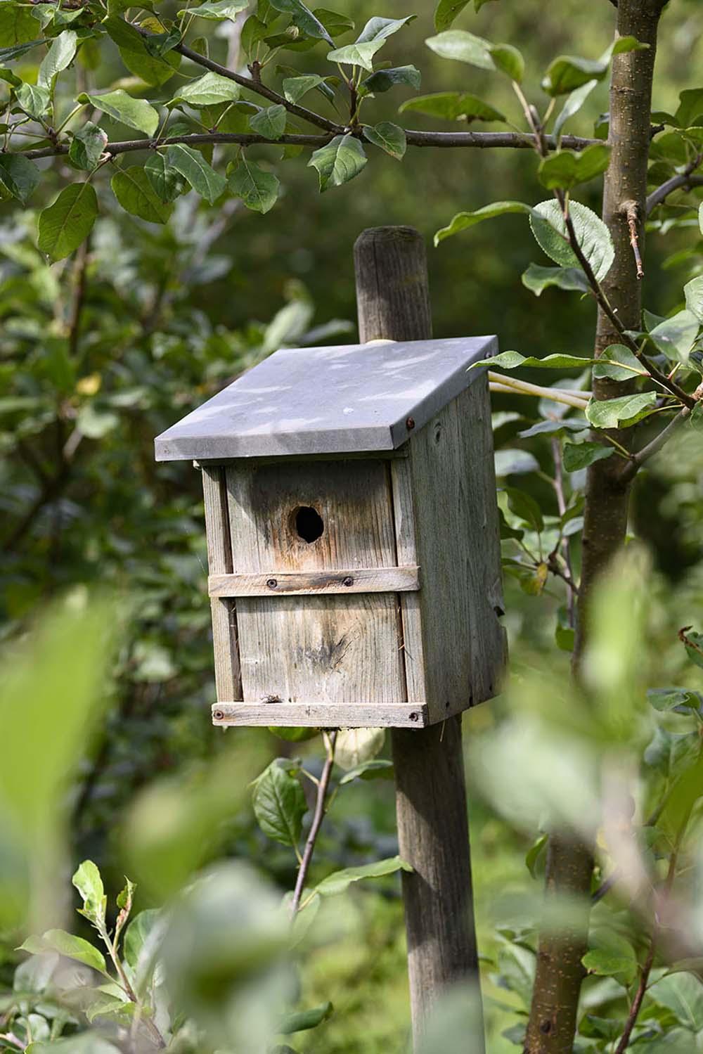 Ein Vogelhaus auf dem Feld mit Birnen und Zwetschgen