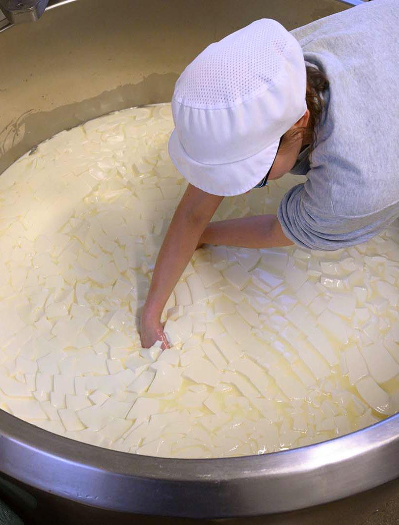Karo zerschneidet in der Käserei die Dickete für ihren Camembert