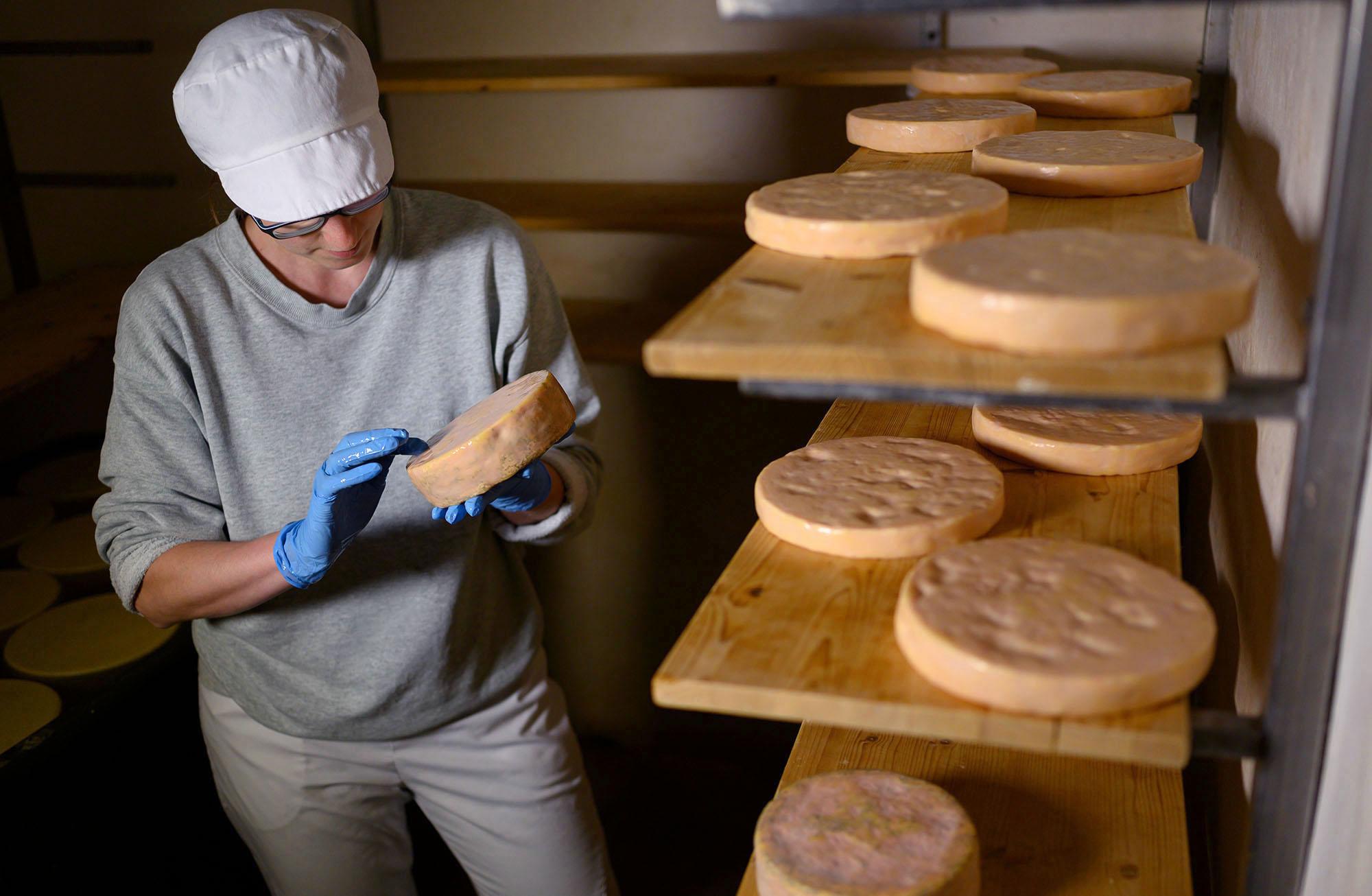 Käserin Karo bearbeitet im Käsekeller ihrer Käserei ihren Käse