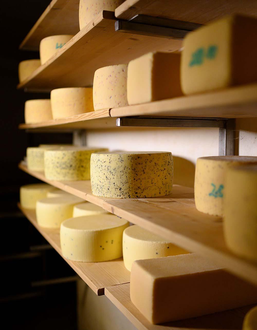 Im Käsekeller der Käserei liegen viele Laibe Käse im Regal