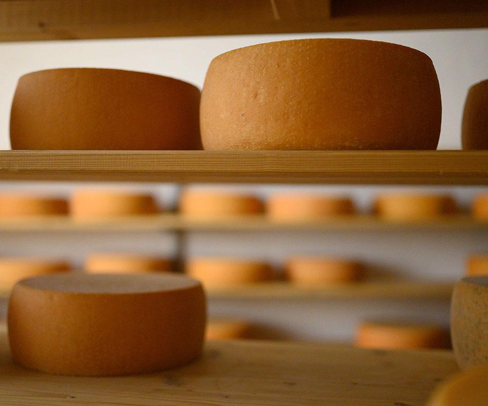 Im Käsekeller der Käserei liegen die Laibe Käse in einem Regal
