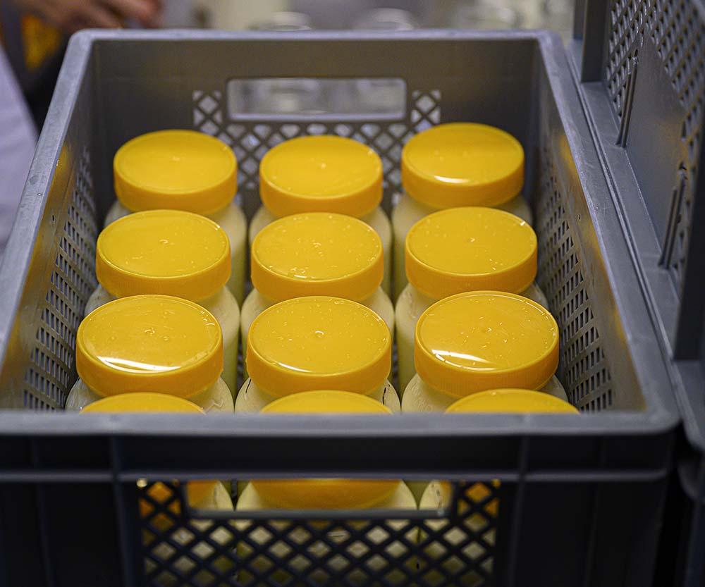 Gläser mit Joghurt in der Käserei