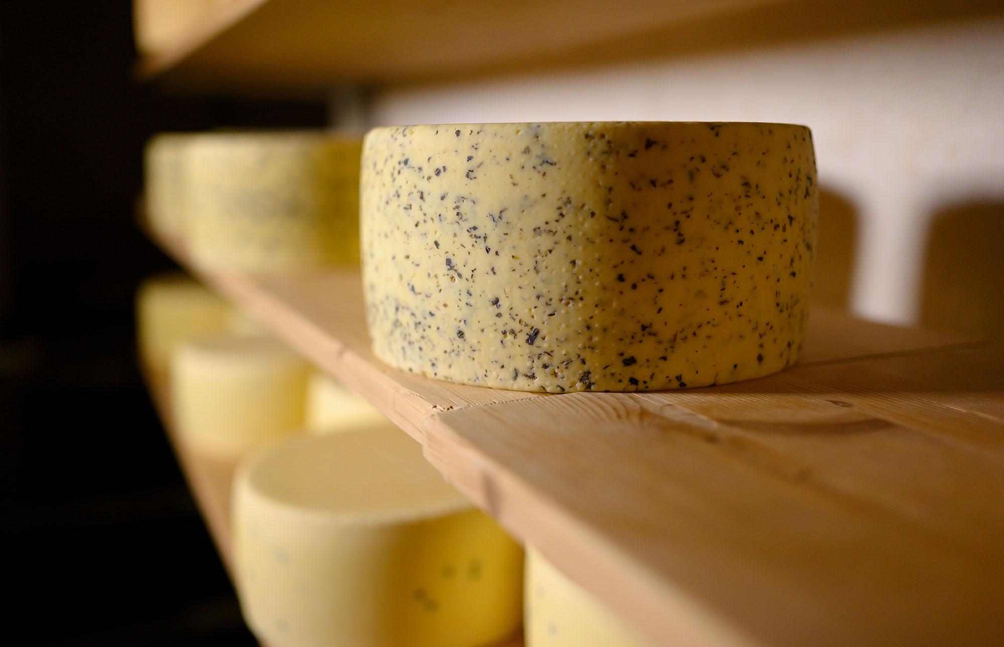 Im Käsekeller der Käserei liegen viele Laibe Käse in einem Regal