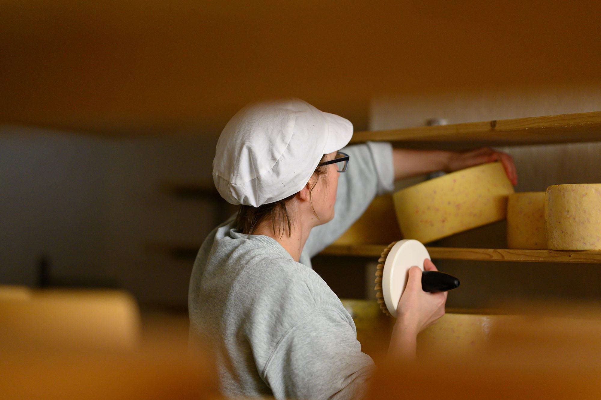 Käserin Karo bürstet im Käsekeller ihrer Käserei ihren Hartkäse