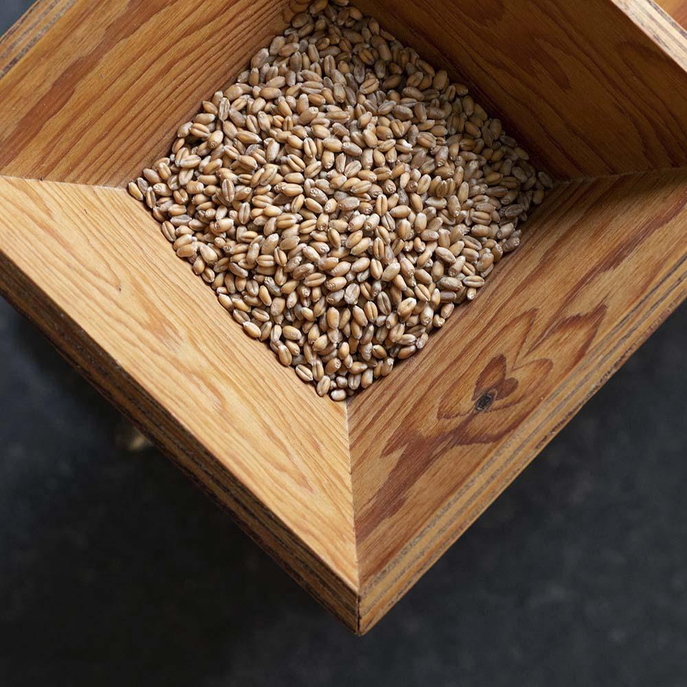 Getreide-Körner in einer Mühle