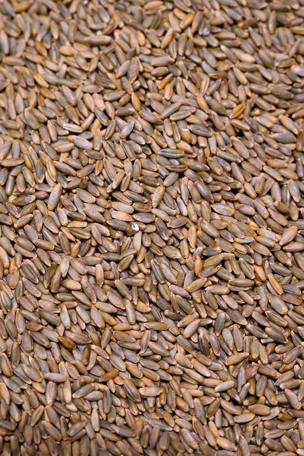 Getreide für Brote