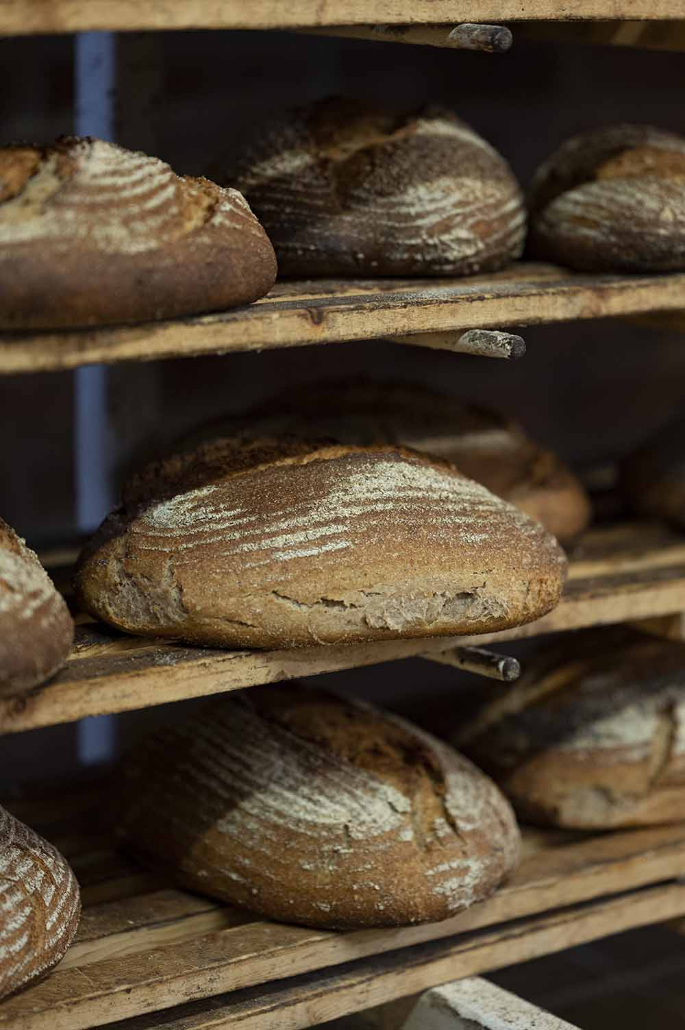 Fertige Brote in der Backstube