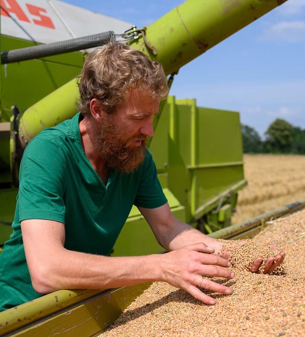 Der Getreide-Bauer prüft sein Getreide
