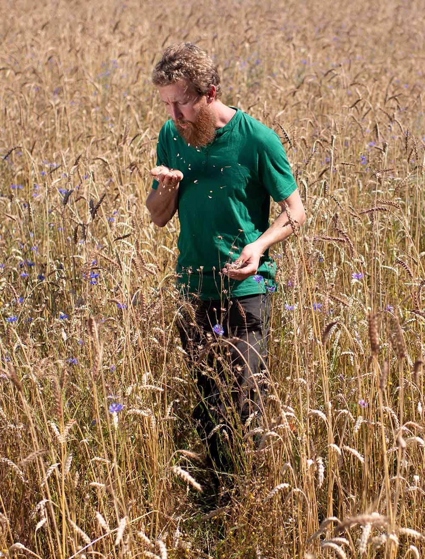 Landwirt Philipp pustet in das Getreide von der Hand