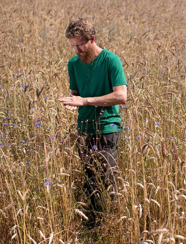 Philipp zerreibt Getreide