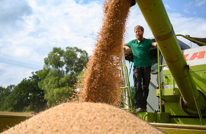 Philipp beobachtet, wie das Getreide in den Anhänger rieselt