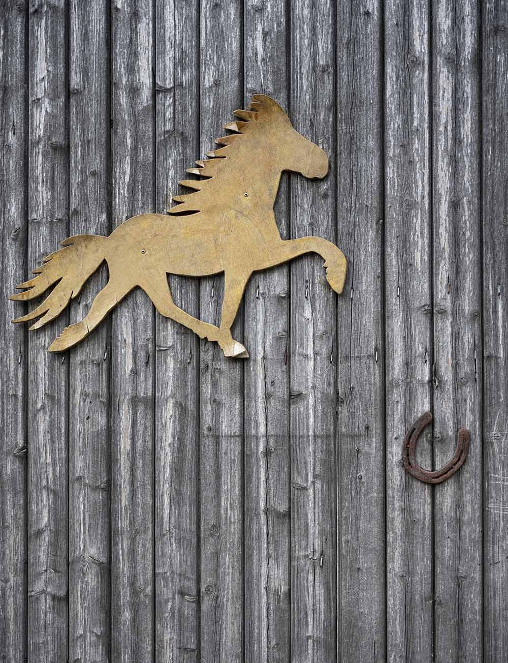 auf dem Erdbeer-Hof leben Pferde