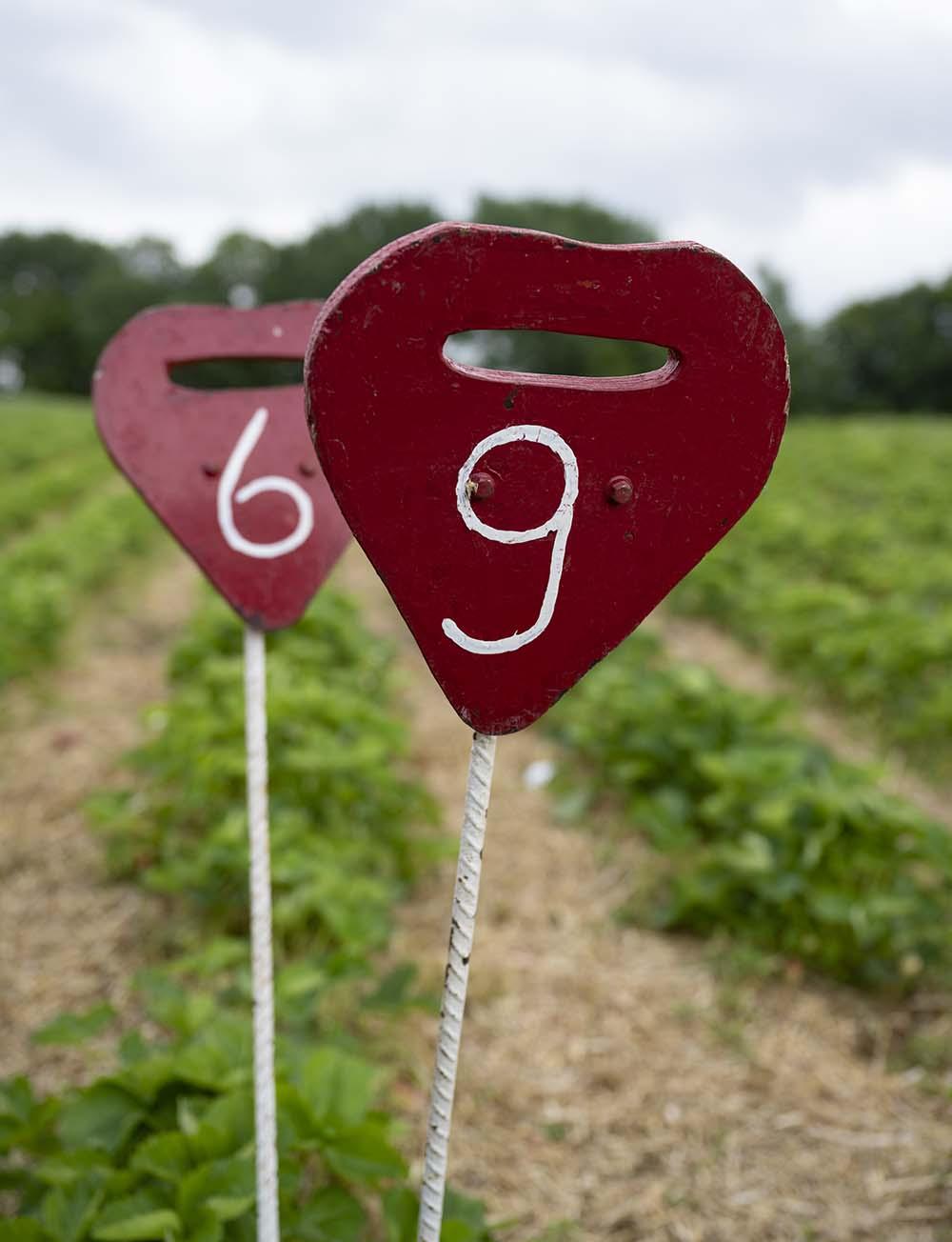 Schilder auf dem Erdbeerfeld