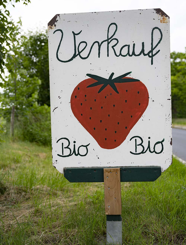 Erdbeeren zum Pflücken