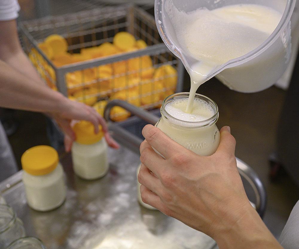 Milch für Joghurt abfüllen