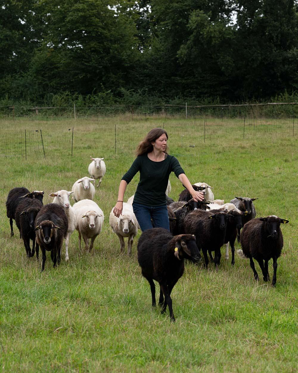 Milchschäferin Sandra führt ihre Herde Krainer Milchschafe zum Melkstand