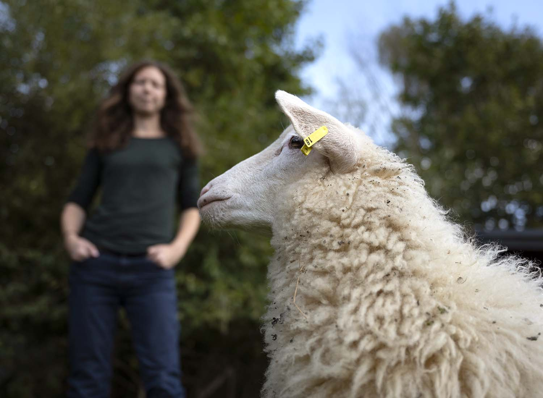 Schäferin mit Lamm