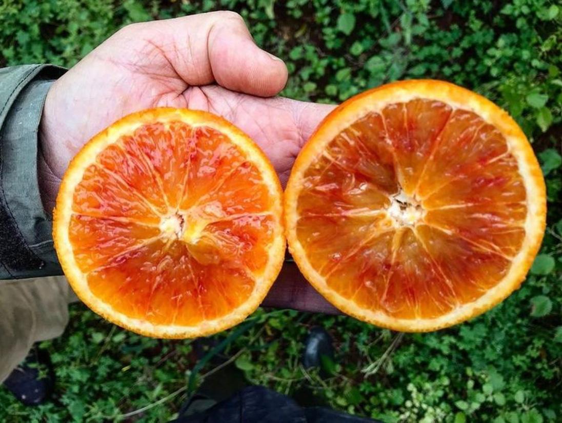 Eine aufgeschnittene Orange