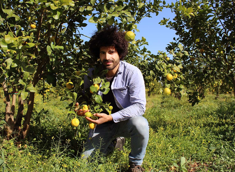 Renato Gibilisco auf einem Feld mit Bio-Zitronen