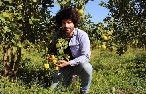 Renato Gibilisco auf einem Feld mit Zitronen