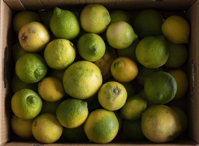Blick in die Kiste voller Zitronen, die in einem Paket zu uns gekommen sind.