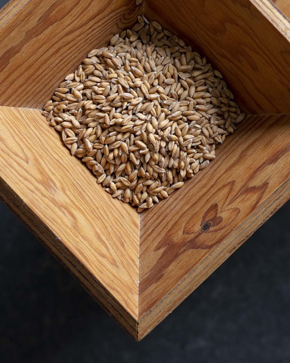 Blick in unsere Getreidemühle. Darin liegen Dinkelkörner, die wir für unsere vollwertigen Brötchen mit Schrot vermahlen.