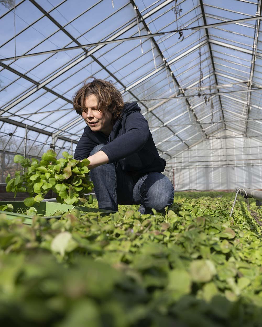 Jenni legt einige Salat-Pflanzen in die Kiste.