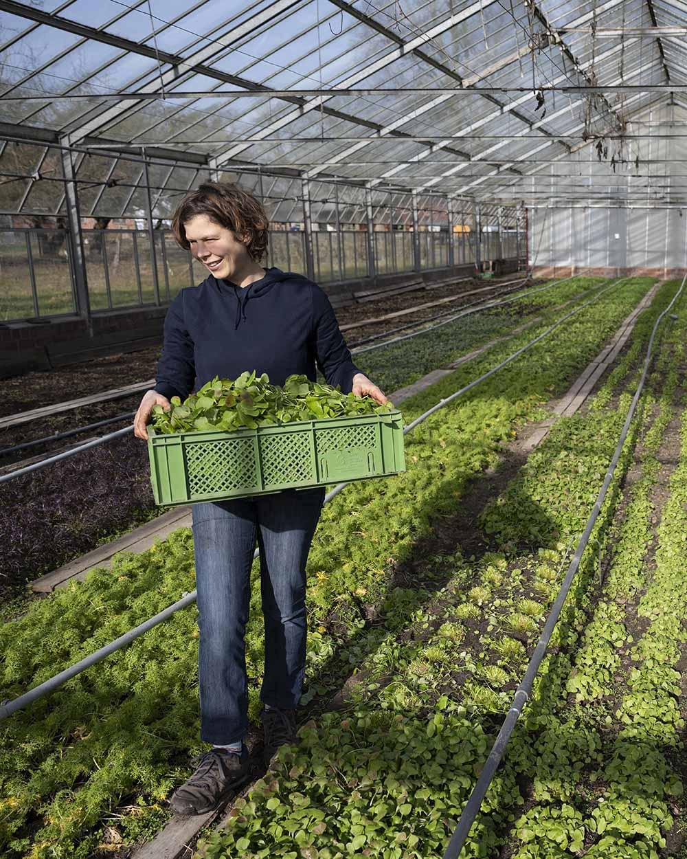 Jenni trägt eine Kiste mit frisch geerntetem Postelein Salat aus dem Gewächshaus.