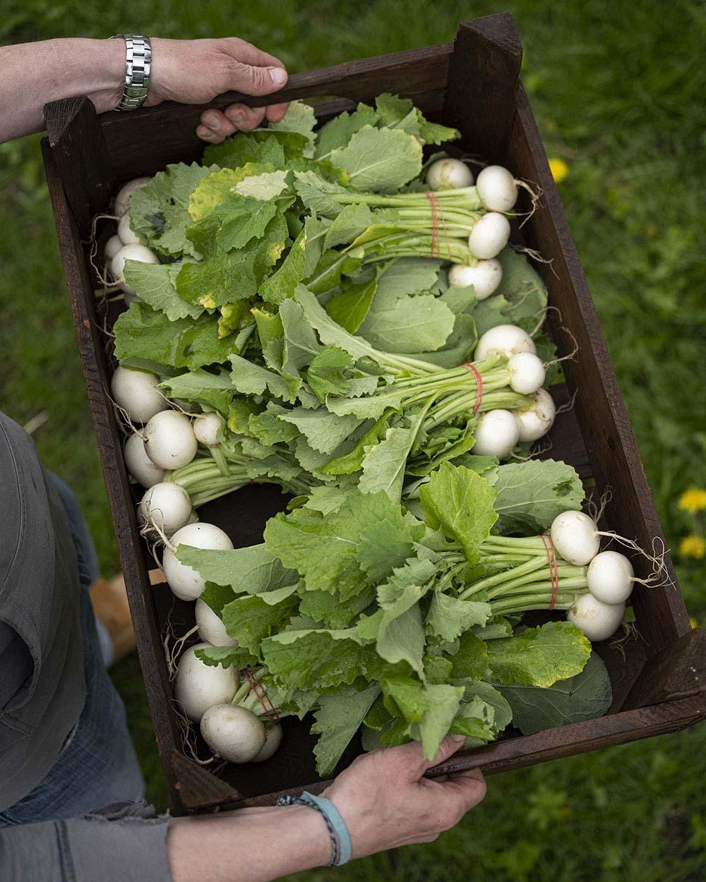 Frisches, saisonales Gemüse vom Hof: Im Mai haben wir Marübchen geholt und belegen damit unseren Flammkuchen.