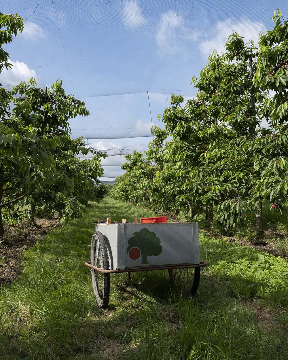 Nahaufnahme des Holzwagens, den Cord für die Kirsch-Ernte benötigt.
