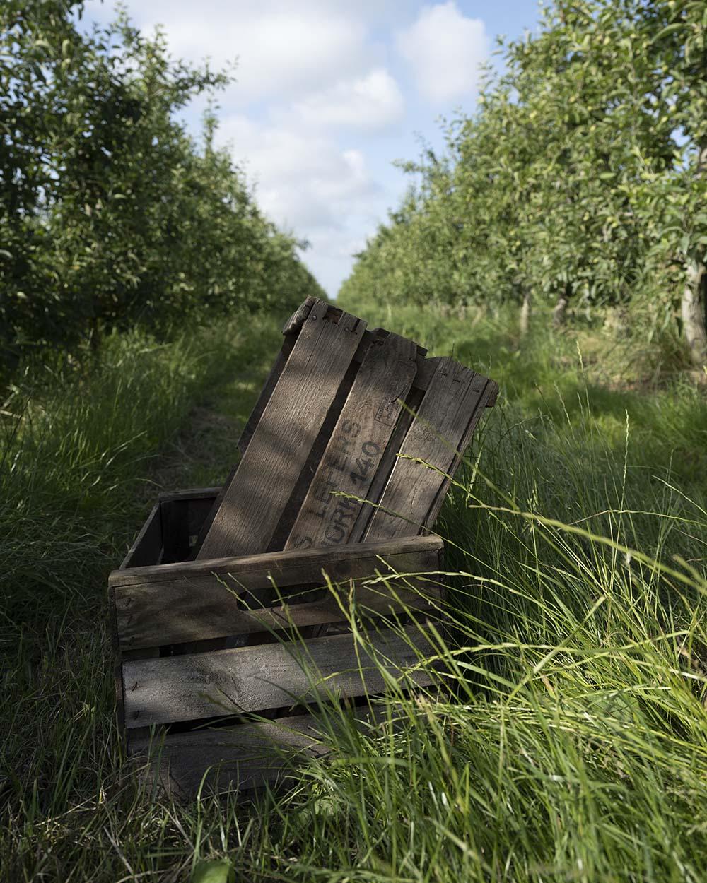 Holzkisten liegen wähernd er Ernte im Gras. Auf ihnen ist der Schriftzug des Obsthof Lefers zu lesen. Wir waren während der Kirsch-Ernte dabei und haben einige Aufnahmen am Rande gemacht.