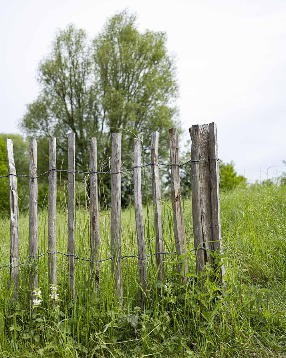 Ein offener Holzzaun im Tierpark Arche Warder, der das freie Gelände und den Freilauf der Tiere symbolisiert.