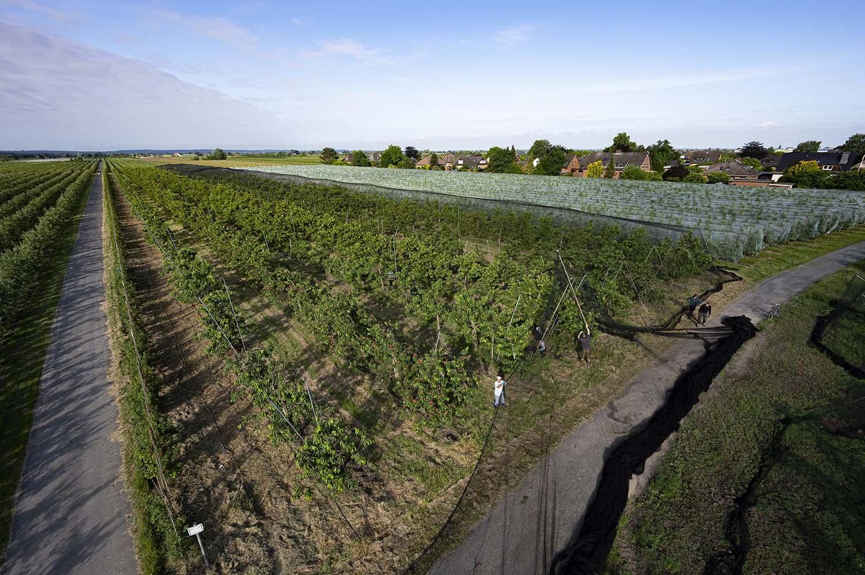 Die Aufnahme zeigt das weite Feld mit den Kirschbäumen aus der Lut. Wir haben Cord Lefers vom Obsthof Lefers einen Tag bei der Kirsch-Ernte begleitet. Hier hebt er mit seinen Mitarbeitern das Netz an, das er zum Schutz vor Vögeln über die Bäume spannt.