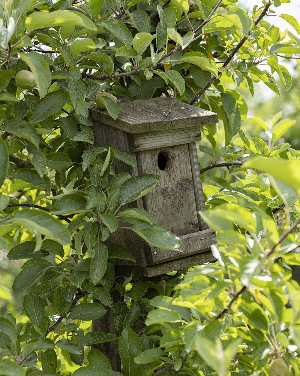 Ein Vogelhaus aus Holz in einem Baum. Cord Lefers liegt der Artenschutz und die Artenvielfalt am Herzen, auch deshgalb hat er den Obsthof Lefers, den er in achter Generation führt, 2017 auf biologische Landwirtschaft umgestellt.
