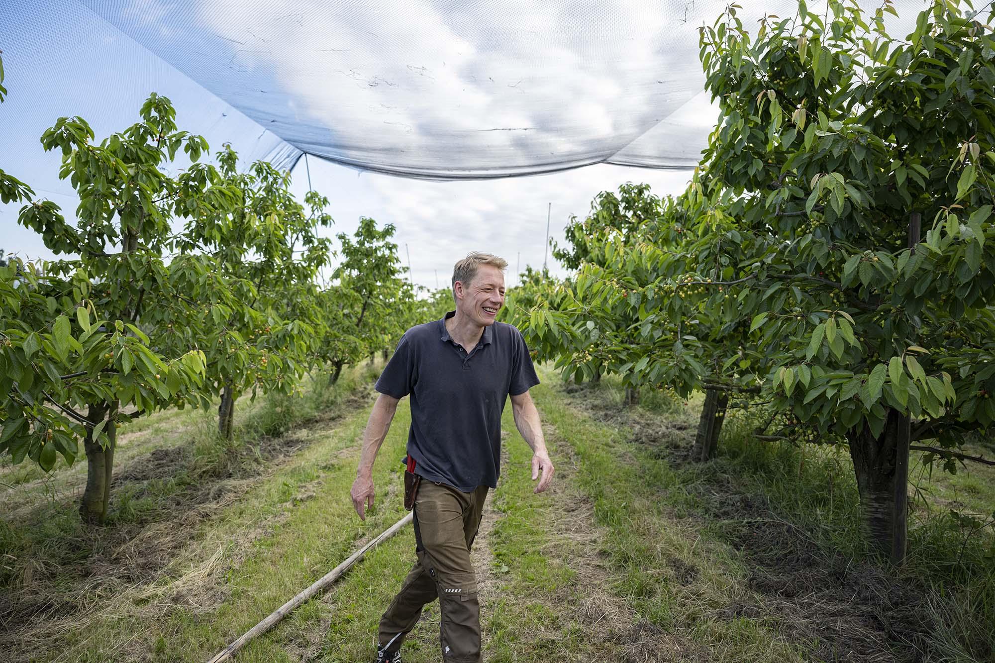 Cord Lefers hat die Netze fertig gespannt. Der Holzstab, den er zum Ziehen der Netze benutzt hat, liegt im Gras. Er lächelt und verlässt das Feld, um auf dem Familienbetrieb, der diverse Sorten Obst anbaut, weiter zu arbeiten.