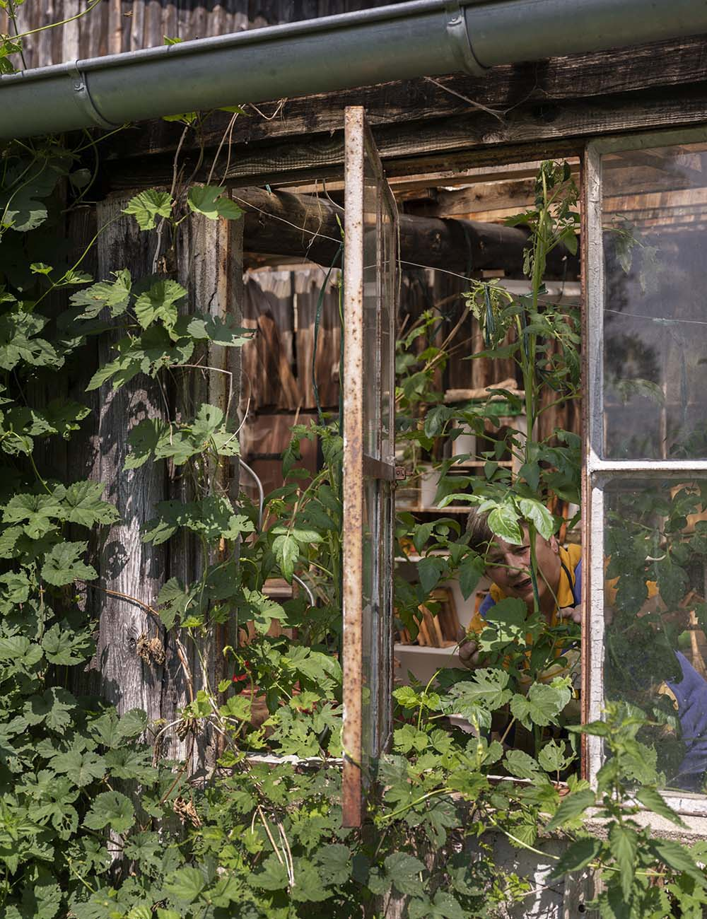 Das Foto zeigt Birgit Wahlen in ihrem Gewächshaus. Sie ist hinter einigen Gurkenpflanzen zu sehen.