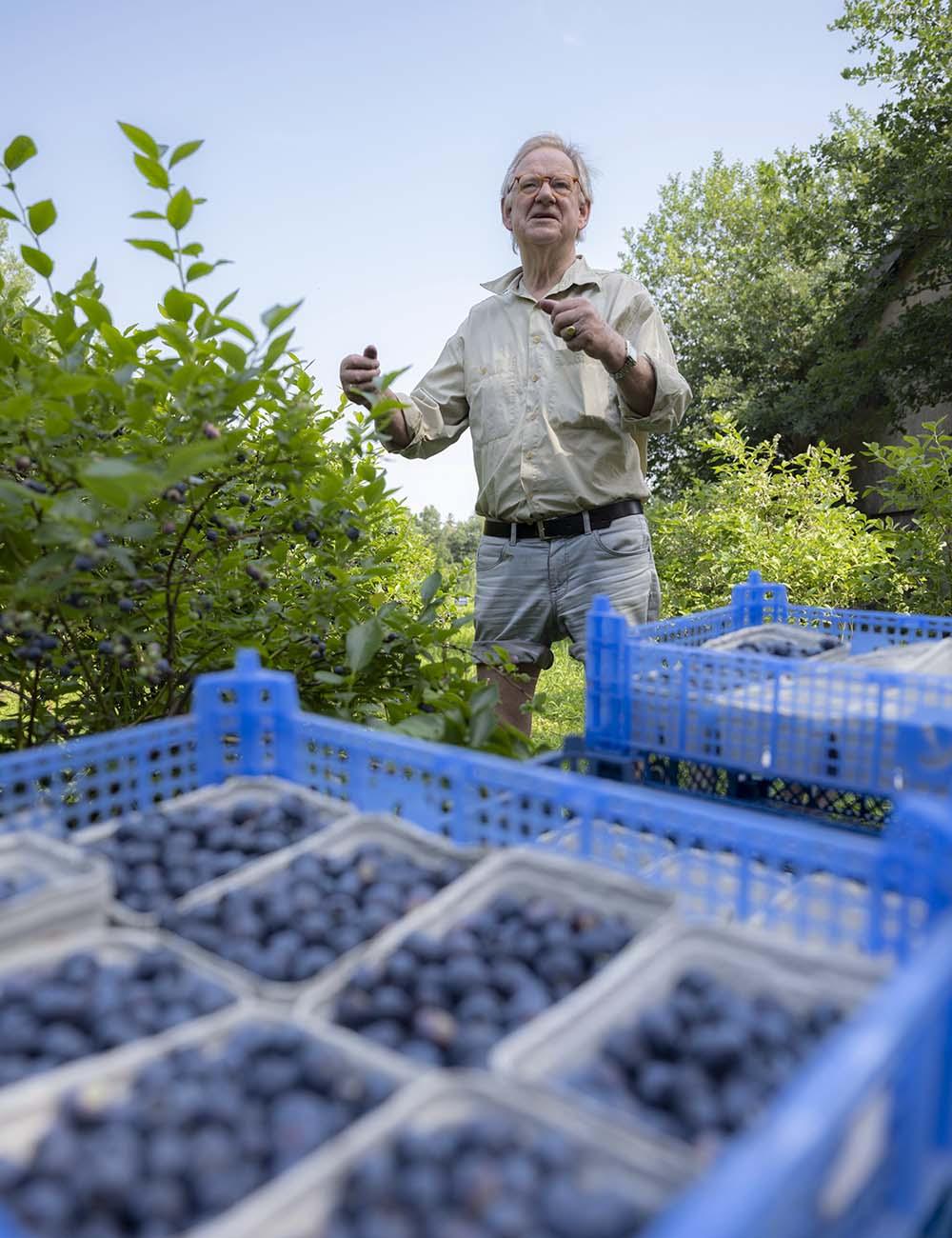 Das Foto zeigt Hinrich Wahlen bei der Ernte seiner Heidelbeeren. Er gestikuliert, um zu verdeutlichen, wie er die Kisten mit Obst stapelt.
