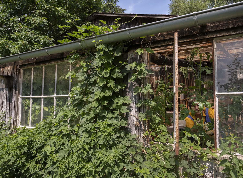 Birgit Wahlen im Gewächshaus ihres Gartens. Neben Obst in Demeter-Qaulität baut Birgit auch Gemüse an, dies aber eher für den Eigenbedarf.